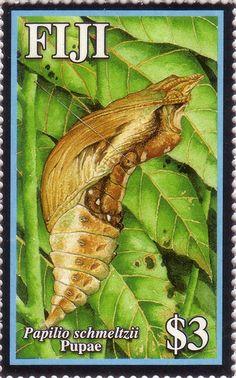 Flora - Fauna on stamps: Papilio Schmeltzii Swallowtail - Fiji Fiji Culture, Flora And Fauna, Vanuatu, Stamps, History, Islands, Butterflies, Shells, Magic