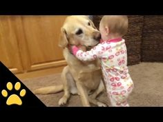 [video]Adorable Dog And Baby Compilation! - http://www.pawsforpeeps.com/videoadorable-dog-and-baby-compilation/