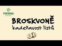 PORADNA PRO DŮM A ZAHRADU: Broskvoně - kadeřavost listů - YouTube Company Logo, Gardening, Youtube, Lawn And Garden, Youtubers, Youtube Movies, Horticulture