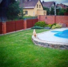 my photo, my dog, my love, shiba inu, holiday