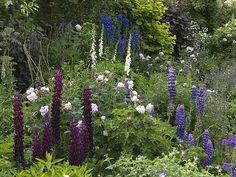 roses, lupin, catmint, haardy geranium, foxglove, delphinium, allium, hazel, achillea, dogwood, crambe, phlomis, cytisus, cirsium