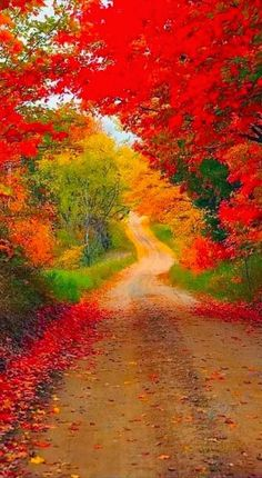 63 Ideas For Country Landscape Art Nature Beautiful Nature Wallpaper, Beautiful Landscapes, Fall Pictures, Nature Pictures, Logo Pictures, Landscape Wallpaper, Landscape Art, Tree Photography, Landscape Photography