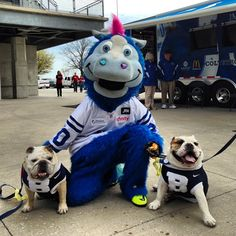 Ran into our old pal @BlueColtsMascot at @MuttStrut!