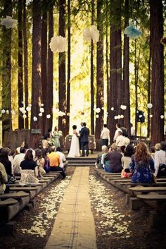 Love the redwoods! #perfect and the paper puffs hanging everywhere