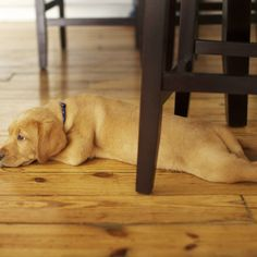 Pet owners who have hardwood floors are constantly faced with the problem of pet odor removal. Hardwood Floor Care, Hardwood Floors, Discount Wood Flooring, Wood Flooring Options, Diy Flooring, Wide Plank Flooring, Bruce Flooring, Odor Remover, Pet Odors