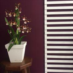 Orquídeas: flores na decoração