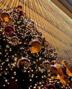 christmas lights - just beautiful !