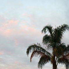 http://www.instagram.com/fannybdn/ #melbourne #australie #palmiers #palmtree