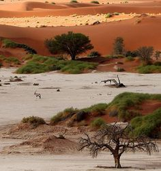 Sossusvlei is a salt and clay pan deep in Namib desert, Namibia + is the only comparable valley for km of high wandering sand dunes. Beautiful World, Beautiful Places, Magic Places, Parks, Chobe National Park, Namib Desert, Les Continents, Out Of Africa, All Nature