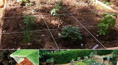 10 Steps to Planting Your Square Foot Garden
