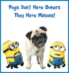Pugs don't have owners - they have minions!