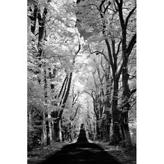 Found it at Wayfair - Country Road by Ilona Wellmann Photographic Print on Wrapped Canvas
