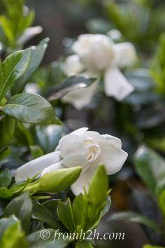 Home & Garden Industrious Petal Crafts Gardenia Cutters Sets Soft And Light