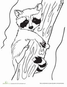 "Baby Raccoon Coloring Page Raa ""ر"" raccoon , raccoon ,راكون"