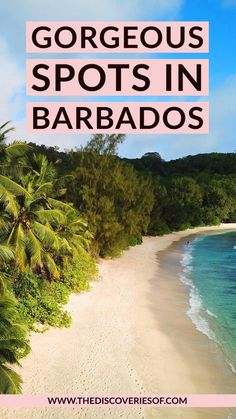 Barbados Barbados Travel, Mexico Travel, Beautiful Islands, Beautiful Beaches, Croatia Travel Guide, Cannabis Seeds For Sale, France, Iceland Travel, Italy Vacation