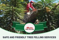 Call Brand's Tree Felling for safe, friendly and reliable tree felling and maintenance services. Contact us on 0861 708 000 or (011) 708-0088 or brandstf@mweb.co.za / office@brandstreefelling.co.za Our Tree Felling teams are equipped with all of the necessary PPE and sanitising equipment. #treefelling #treecutting #dangeroustreeremoval #fallentreeremoval #essentialservicespermit #treefellingsolutions #brandstreefelling