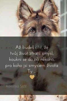 Animals And Pets, Cute Animals, Dog Body Language, Diary Quotes, True Words, Wallpaper Quotes, Live Life, Quotations, Motivational Quotes
