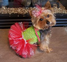 Dog TuTu Dress for toy breeds in Lime and Red with by Frillypaws, $35.00