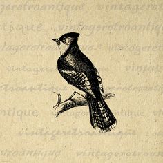 Printable Image Bluejay Graphic Bird by VintageRetroAntique
