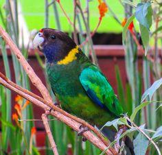 The Twenty Eight Parrot