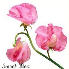 Favorite Flowers: Sweet Pea