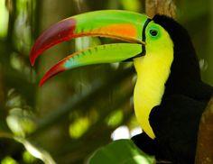 Belize Rainforest Toucan #ExpediaThePlanetD