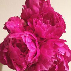 Good morning beautiful! #nofilter necessary  #peony #spring #flowersofinstagram