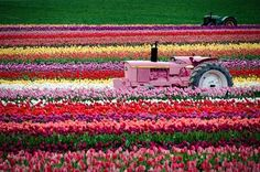 In April, the Netherlands is covered with flowers. Description from pinterest.com. I searched for this on bing.com/images