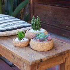 Pots pour plantes en liège pour les cactus et les plantes succulentes