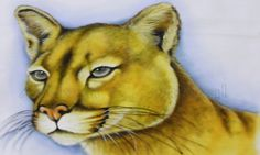 Pintura de Animais - Puma Pardo