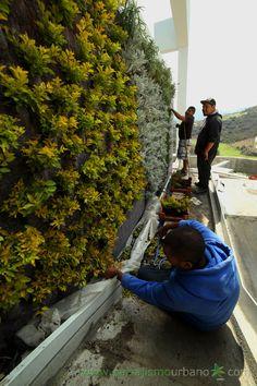 Construcción en Morelia de un ecosistema vertical compuesto por 13 muros verdes realizados por Paisajismo Urbano