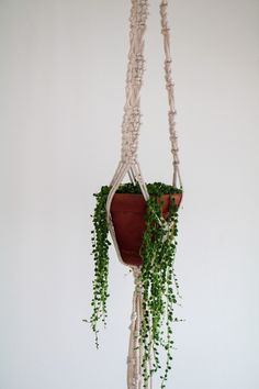 Plant Hanger, Sweet Home, New Homes, Plants, Room Ideas, Rooms, Home Decor, Bedrooms