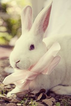 The most quintessentially darling Easter bunny imaginable. #Easter #rabbit #bunny #animals #pets #spring #cute