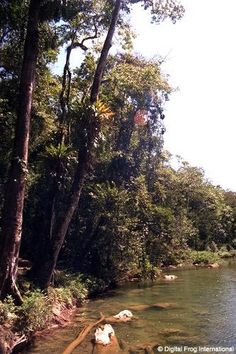Blue Creek, Belize. Blue Creek is a river that runs along the Belize–Mexico border. It is a tributary of the Hondo River. It is known as the Río Azul in Mexico.