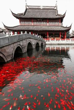 Koi-Tempel – Zhou Zhuang – Shanghai – China – # 中国 … - Reisen Tips Places To Travel, Places To Visit, Travel Destinations, Asian Architecture, Ancient Architecture, Temple Architecture, Travel Aesthetic, Aesthetic Japan, Red Aesthetic