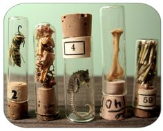 Specimen Collection in Vintage Vials Mixed Lot by PULPmiscellania