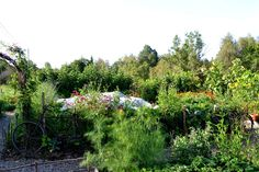 http://skillnadenstradgard.se/ #garden #gardening #kitchengarden #growveggies #trädgård #odla #köksträdgård