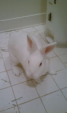 Snow lives up to her name! She is also a very friendly, social rabbit who loves to play. Come meet her today! New Zealand Rabbits, Snow Today, Cute Bunny, Humane Society, Adoption, Meet, Play, Bunnies, Foster Care Adoption