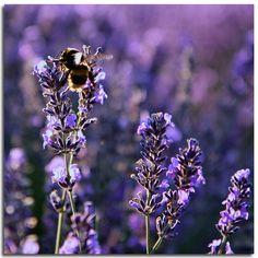 wikiHow to Trim Lavender -- via wikiHow.com