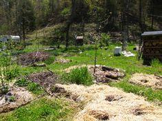 Hugelkultur method, planting vegetable beds beyond new fruit tree canopies.
