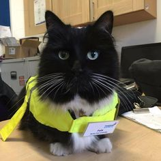 Recently promoted to chief pest controller,Felix proudly displays her new yellow jacket and badge.