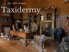 6 Facts About The Amazing Art Of Taxidermy