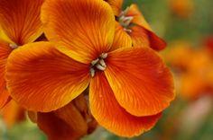 082 Flowers | Orange