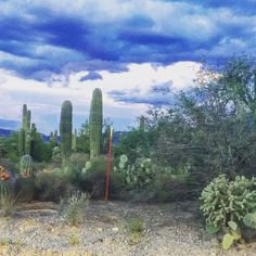 """This looked like a movie set. Don't go off the beaten path! #tucson #arizona #tucsonaz #desertsky #desert #summer #cacti #cactus #landscapephotography #landscape #terrain #travel #travelphotography #traveler #travelblogger"" by @deliriousmistakes690. #europe #roadtrip #여행 #outdoors #ocean #world #hiking #lonelyplanet #instalive #ilove #instalife #sightseeing #unlimitedparadise #tour #instamoment #instacool #instagramers #instapicture #travelingram #instatraveling #traveler #traveller…"