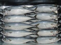 Mackerel fish frozen can be cooked to certain delicious and tasty recipes. Mackerel contains healthy nutrients that are good for your body such as omega 3 fatty acids, protein, minerals, and vitamins.