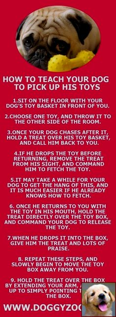 9 Best Puppy schedule images in 2018   Dog care, Puppies, Dogs
