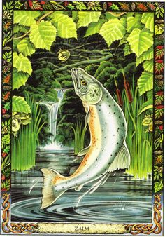 Salmon | The Druid Animal Oracle by Stephanie and Phillip Carr | Meaning: wisdom, inspiration and rejuvenation | Reversed: this card means trying too hard to reach goals.