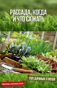 Small Farm, Parcs, Organic Farming, Summer Diy, Growing Plants, Vegetable Garden, Countryside, Garden Design, Seeds