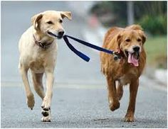 71 Best Stray Dogs      HELP! images | Dog rescuers, Paws