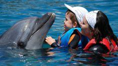 Golfinho na terapia assistida por animais